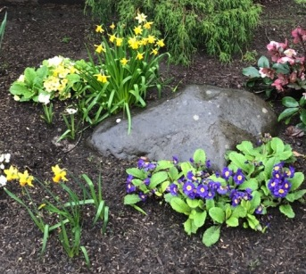flowers-plants